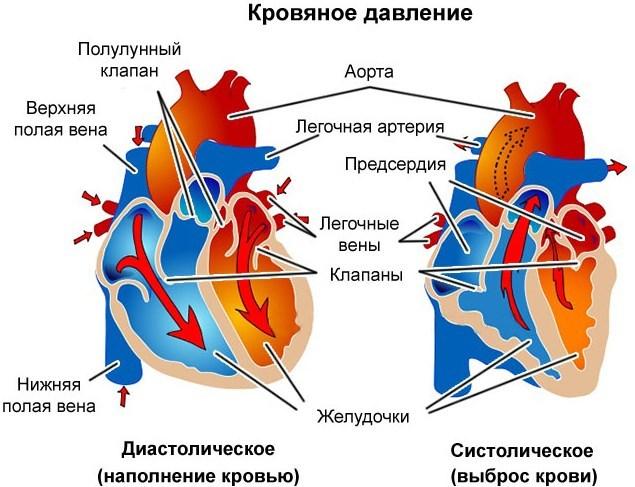 Нормы и причины изменения сердечного давления