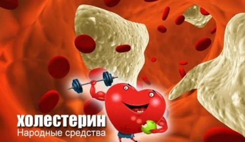 Применение фитотерапии для снижения холестерина в крови