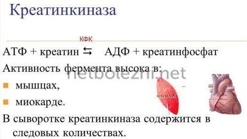 Цель назначения КФК-МВ и расшифровка результатов