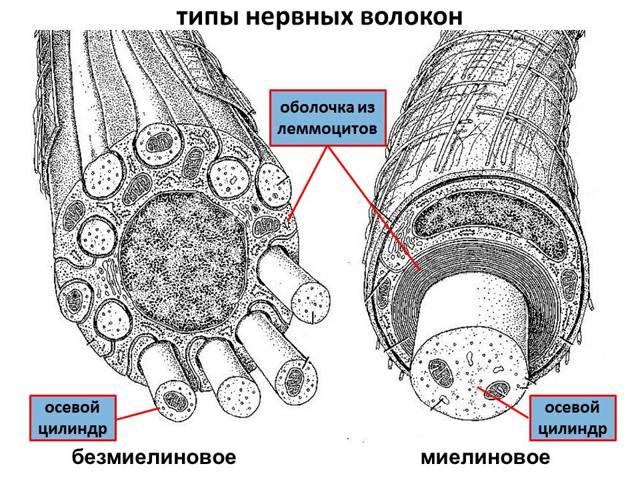 Лечение и возможные осложнения при порфирии