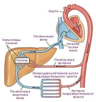 Причины, симптомы и лечение портальной гипертензии