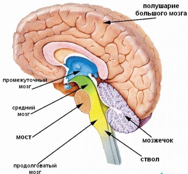 Причины, лечение и прогноз при церебральной дистонии