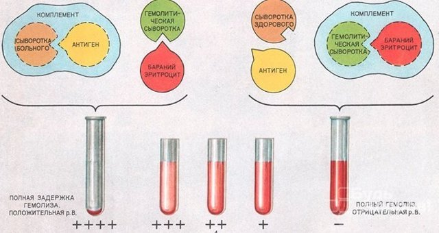 Что значит анализ крови на RW?